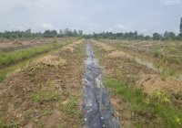 Cần bán gấp đất nông nghiệp 7.700m2, mặt tiền đường nhựa 5m, lên thổ vườn trồng cây ăn trái