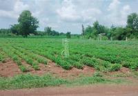 Chính chủ cần bán gấp 689m2 đất tại Đất Đỏ, BRVT, giá 2.75 tỷ, SHR, thổ cư
