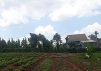 Bán đất chính chủ gần chợ xã Ea Kao, TP. Buôn Ma Thuột, Đăk Lăk. 195m2 (5m x 39m), thổ cư 60m