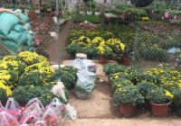 Cần bán mảnh đất thổ cư 150m2 thuộc làng hoa. Cách KĐT Ecopark 1,5 Km, Vinhomes Ocean Park 1