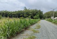 Đất nền SHR, xã Phú Mỹ Hưng, Củ Chi, đất nền đầu tư chỉ từ 7 - 9tr/m2, đất nền TP. HCM