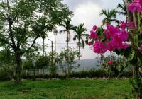 Nhanh tay sở hữu ngay lô đất vị trí đẹp 617m2 có 240m2 đất ở tại xã Hòa Phong