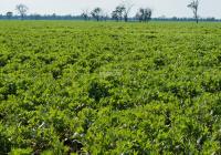 Cần bán 100ha đẩt quy hoạch trang trại, đáp ứng đầy đủ tiêu chí tại Đăk Lăk