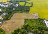 Đất ruộng thuộc phường Mỹ Quý, Long Xuyên, An Giang - DR004
