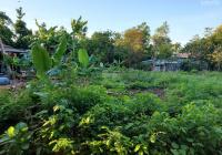 Mùa dịch cần vốn xoay sở nên muốn bán lô đất 617 có 240m2 đất ở mặt đường xã Hòa Phong