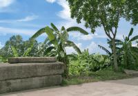 Bán đất Vạn Phúc, Thanh Trì làm trang trại, kho xưởng, vị trí đẹp, 297m2, 630 triệu. LH 0982008085