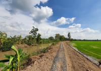 Bán 721m2 (9x84m, đất lúa) đường đá 3m, xã Mỹ Thọ, H. Cao Lãnh, Đồng Tháp