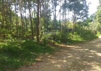 Cần bán nhanh 4.288m2 đất thổ cư đẹp giá siêu rẻ tại Lương Sơn Hòa Bình