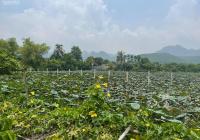 Bán đất Lạc Thủy Hòa Bình bám hồ sen đẹp nhất khu vực làm nghỉ dưỡng đầu tư, DT 2300m2