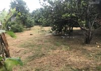 Mình cần bán đất xã Bình Hòa, Vĩnh Cửu DT 700m2 có vườn bưởi sẵn xe hơi tới đất 18x39m giá 3 tỷ