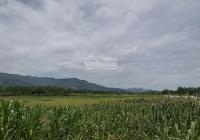 Bán 2000m2 đất nghỉ dưỡng Lương Sơn Hòa Bình view cánh đồng