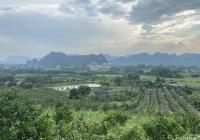Cần tiền gấp bán trang trại nhà vườn nghỉ dưỡng DT 5 ha tại lạc thủy Hb. Chi tiết LH 0984159168