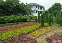 Bán đất Khu hưu trí Bắc Hưng Hải, Xuân Quan, Văn Giang, Hưng Yên, 377m2, MT 16m, 0988312321