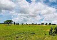 Tôi chính chủ cần bán miếng đất tại xã Sông Bình DT 14.798m2, giá rẻ chỉ 70 ngàn/m2. Sổ đỏ riêng