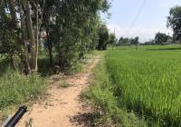 """Tiến An - 1,1 sào ruộng quy đất ở đô thị tại """"phường"""" Ninh Quang"""