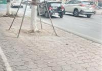Cực hiếm mặt phố Nguyễn Thái Học DT 400m2 x 2T, MT 15m, vỉa hè rộng, kinh doanh siêu đỉnh 230 tỷ