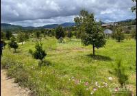 Bán đất sào Bảo Lộc, thích hợp cho ý tưởng bỏ phố về vườn - tránh dịch - đầu tư