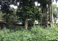 Chính chủ cần bán lô đất 200m2 vị trí đẹp nhất Hoàng Trạch, Mễ Sở, Văn Giang - Hưng Yên