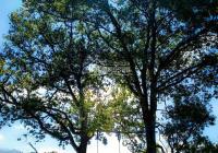 Đất nền nghỉ dưỡng, thuộc thôn bảo tồn Choản Thèn - Y Tý (Sapa 2). Giá chưa tới 2tr/m2
