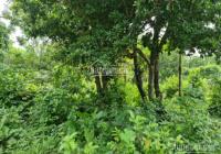 Siêu phẩm đất thổ cư tiềm năng kinh tế cao tại Lương Sơn