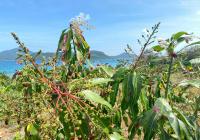 Bán khu đất lưng tựa núi mặt hướng biển khu Tây Bắc đảo Hòn Lớn Bắc Vân Phong, LH 097 546 7676