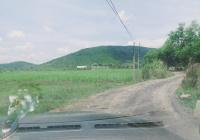 Đất cây lâu năm 10.000m bằng phẳng, ngang mặt đường 70m, oto tới nơi, giá 635tr, Ninh Xuân, Ninh Hòa
