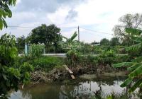Cần bán gấp 7.725m2 đất vườn đang trồng nhãn Idol