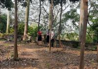 Cần bán nhanh biệt thự 401m2 tại đường Hoa Điệp Vàng - KĐT Quang Minh. LH 0989734734