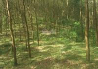 Bán 56ha đất RSX tại Yên Thủy, Hòa Bình thế đất đồi bát úp view cực đẹp đường to