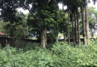 Cần ra đi nhanh mảnh đất 450m2 tại Hoàng Trạch, Mễ Sở, Văn Giang - Hưng Yên