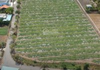 Bán đất để làm nhà vườn, kho xưởng tại Xã Phước Hậu, Huyện Cần Giuộc, Long An   Đất vườn Cần Giuộc