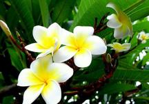 8 loại hoa không nên cắm trên ban thờ ngày Tết