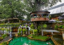 Độc đáo quán cà phê trên cây ở Sài Gòn
