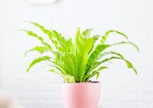 Các loại cây cảnh trong nhà vừa đẹp, vừa dễ trồng dành cho người bận rộn