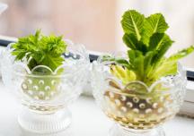 Trồng rau từ gốc bỏ đi - bạn đã biết cách?