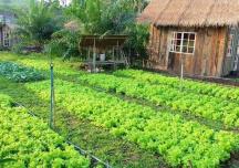 Chuyển đổi đất nông nghiệp sang đất ở: Điều kiện, thủ tục và hồ sơ
