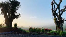 Cần bán đất Bảo Lộc Park Hill, view đồi, giá rẻ sổ sẵn