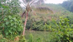 Bán đất Kim Bôi Hòa Bình DT 1,2ha có 455m ont còn lại là đất vườn view đẹp giá 1,6 tỷ