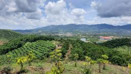 Đất chính chủ 5000m2 view đỉnh núi, cách trung tâm TP Bảo Lộc 12km, sát khu dân cư.