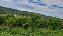 Cần tiền trị bệnh cần bán gấp 2 sào vườn ca phê, giá 1 tỷ tại Lộc Thanh - Bảo Lộc