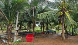 Bán 2ha đất, 500 cây dừa, ao cá, 800 trụ thanh long tại Hàm Thuận Bắc - Bình Thuận LH 0937809539