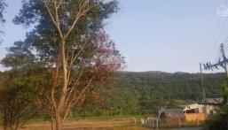 Bán đất núi Dinh, tỉnh Bà Rịa Vũng Tàu, vị trí phong thủy tốt, hiếm, thế đất đẹp