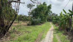 Bán miếng đất vườn xoài diện tích 3200m2 tại xã Long Hoà. 0707036993 gặp Loan