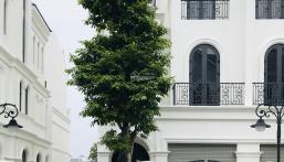 Biệt thự song lập Ngọc Trai  đảo nhỏ 165m2 Vinhomes Ocean Park giá chỉ 15.5 tỷ