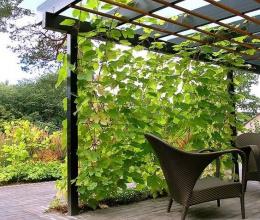 Những khu vườn xinh đẹp chưa đến 2m2 cho nhà nhỏ