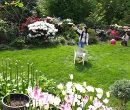 Khu vườn 500m2 như công viên hoa của mẹ Việt