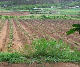 Thời điểm tính thu tiền sử dụng đất là khi nào
