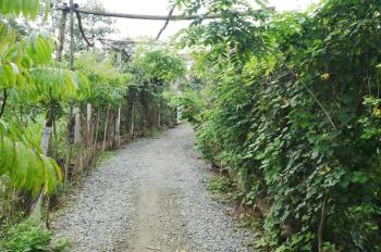 Cần bán nhà vườn sinh thái rộng 1616m2 đã hoàn chỉnh