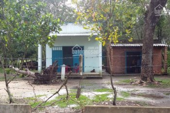 Sang nhượng 27ha đất cao su 14 năm tuổi đang thu hoạch tốt Ấp Bào Teng, Quang Minh LH 093814.4984