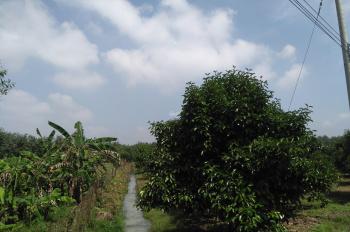 Chính chủ cần bán mảnh đất vườn DT: 8.000m2, mặt tiền sông Sài Gòn, xã Phú An, Bến Cát, Bình Dương